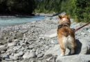 Top 5 Ways to Enjoy Whistler with Your Dog